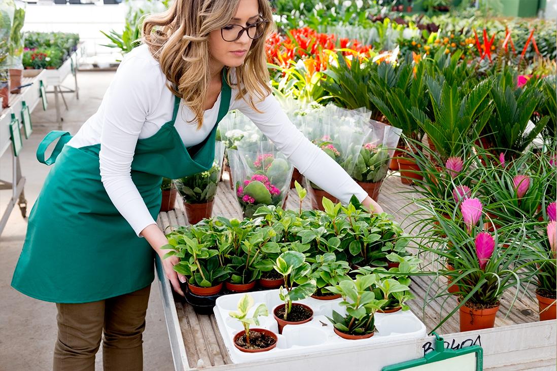 Programme de fidélité jardinerie